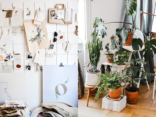 Pokojové rostliny jsou základ
