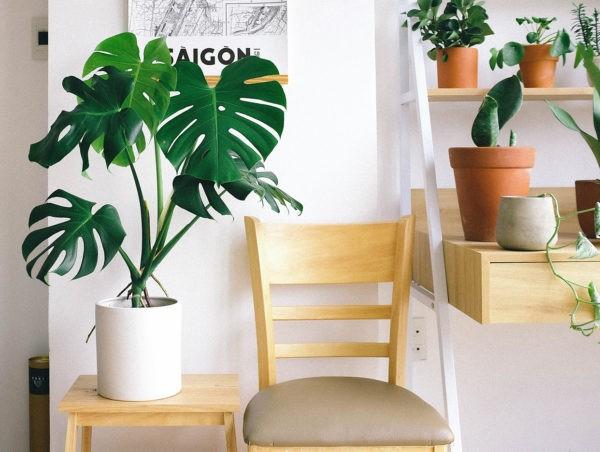 Pokojové rostliny v interiéru